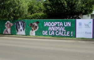 Ayuntamiento Encabeza Campaña Para Adoptar Perros y Gatos Callejeros