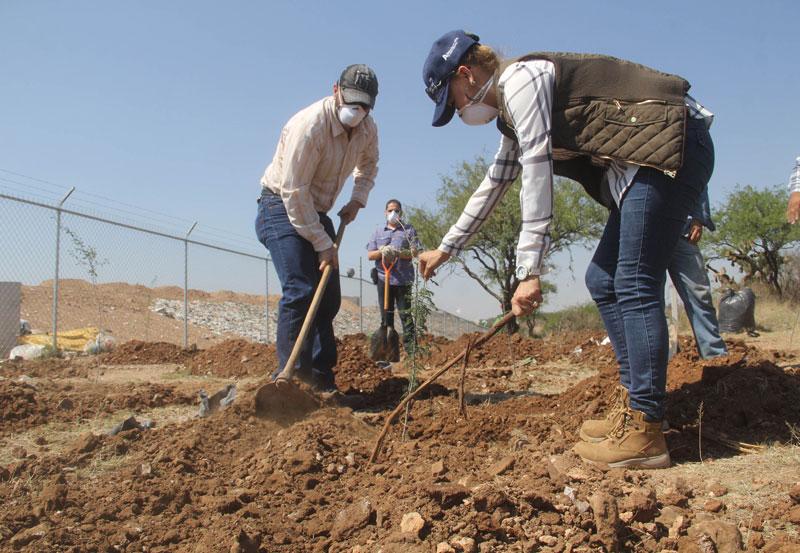Ayuntamiento Disminuye Daño Ambiental con Plantación Masiva de Árboles